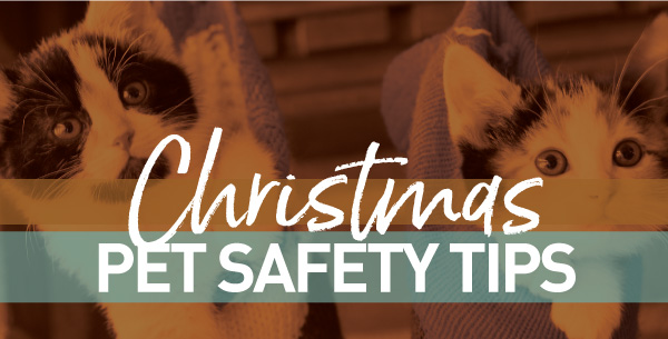 Christmas Pet Safety Tips!