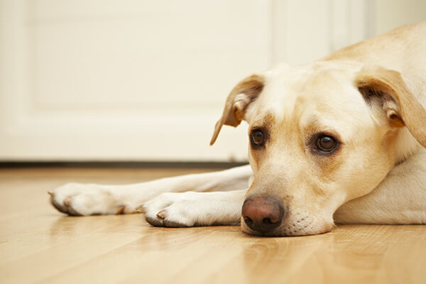Protect Your Pets from Rodenticide and Antifreeze Poisoning