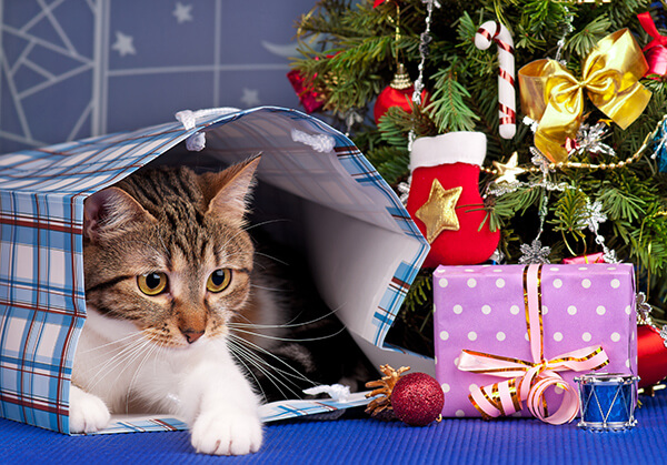 Protect Your Pets from Holiday Hazards
