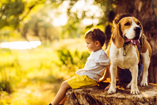 Keep Your Pets Safe From the Heat This Summer