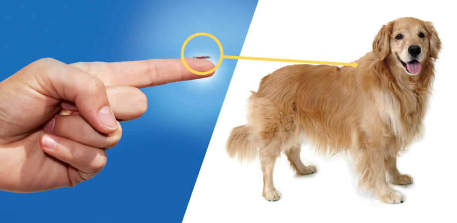 Microchip Your Pets Before Your Busy Summer