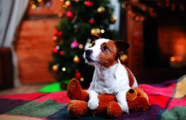 Happy Holidays from Pet Medical Center of Edmond