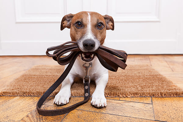 Book Your Pet's Holiday Boarding Stay