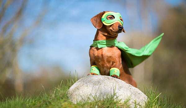 Tips for Keeping Pets Safe on Halloween