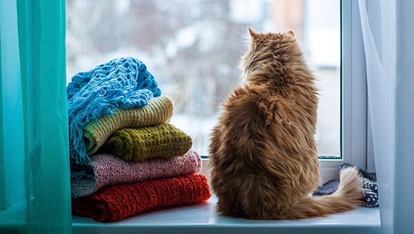 How to Protect Pets During Harsh Winter Weather