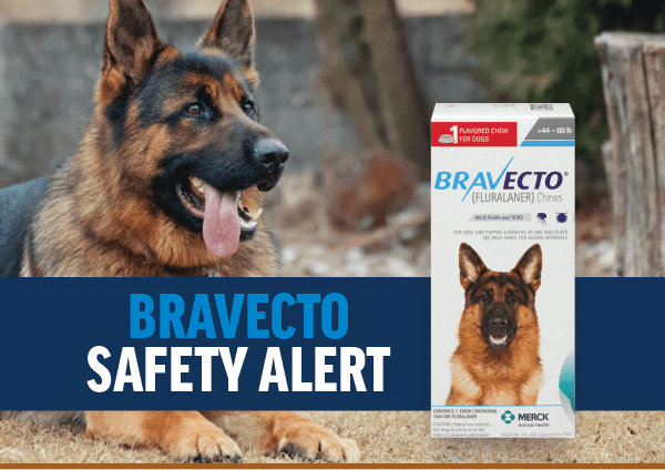Bravecto Alert: What You Need to Know